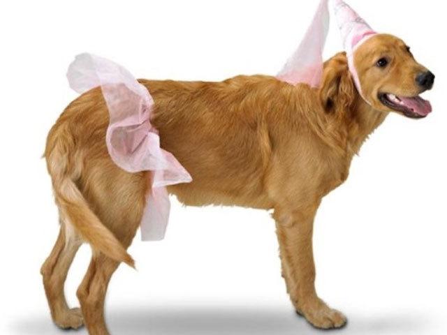 Image result for dog princess