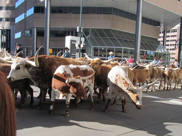 Texas Longhorns To Parade Through Denver At Noon For The