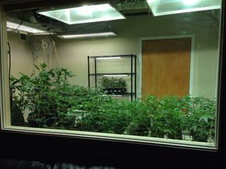Pueblo County pot raids down sharply