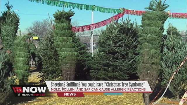 Mold, pollen, and sap from Christmas trees could cause allergic ...