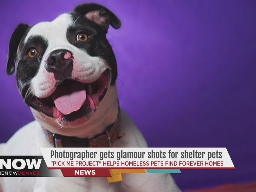 Denver photographer gives shelter pets glamour shots to help find them homes