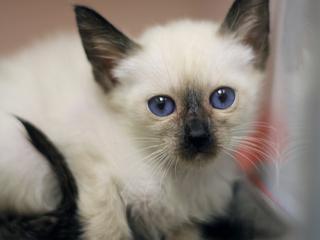 ebony kitten tube