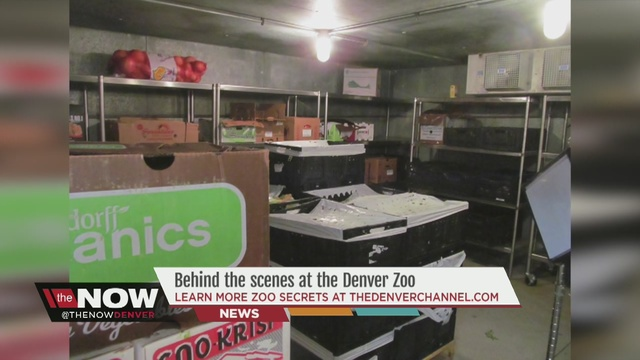 Behind The Scenes At The Denver Zoo Kitchen