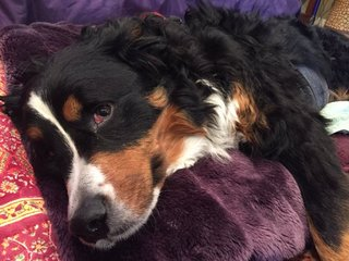 Popular therapy dog suffers stroke, receives aid