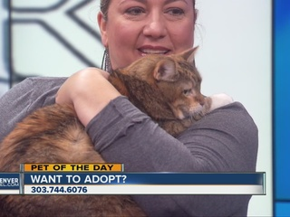Pet of the day for April 2 - Kanga the kitty