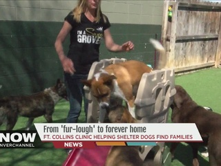 From 'fur-lough' to forever home