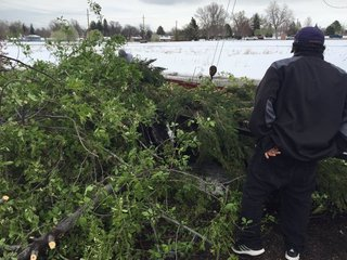 Businesses, residents take care of storm debris
