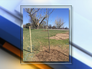 Trees replaced in Washington Park for Earth Day