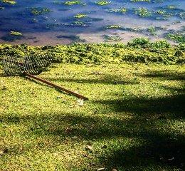 Crews clean up algae-covered lake at City Park