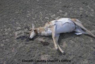 $10,000 reward offered to find cattle killer