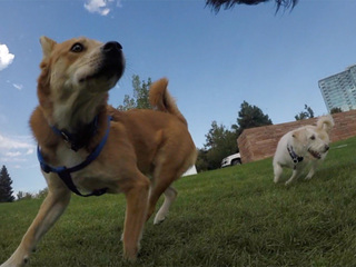 A new pop-up dog park is coming to Denver