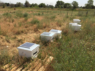 Hive Tech Solutions: CU working to save the bees