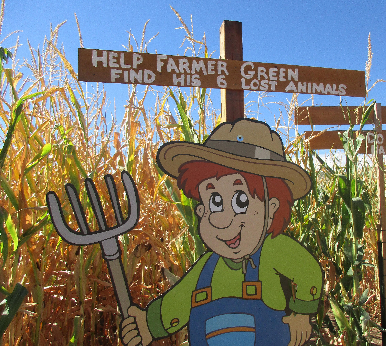 CORN MAZE: Go inside the Denver Botanic Garden\'s Chatfield Farm corn ...