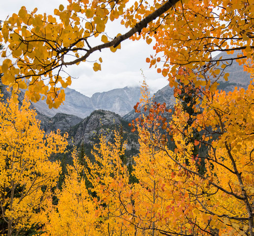 Cool Places In Colorado: 5 GREAT Places To See The Fall Colors In Colorado Right