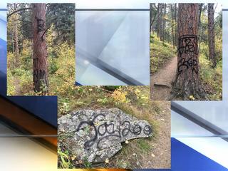 Trees, rocks vandalized at O'Fallon Park trail