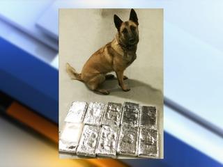 Pueblo K-9 finds 10 kilos of cocaine worth $1.1M