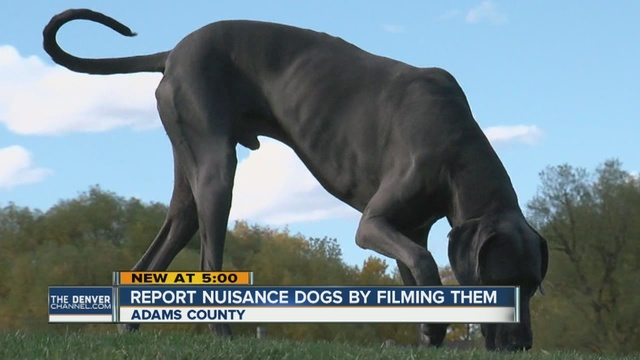 Adams County To Allow Neighbors To Report Nuisance Dogs By Shooting