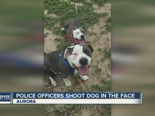 Aurora police officers shoot loose dog in Aurora