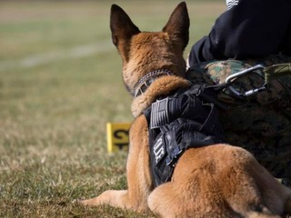 Nonprofit raising funds for Longmont K-9 Unit