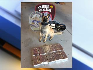 Pueblo K-9 Widget makes another $1M cocaine bust
