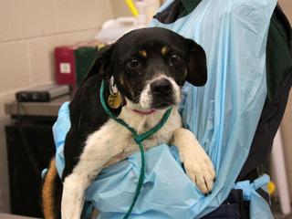 Hundreds of dogs up for adoption in Denver