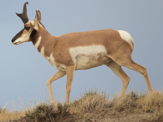 11 big game animals left to rot in eastern Colo.