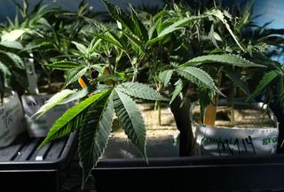 Colorado pot sales reach $1 billion
