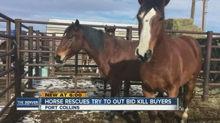 Horse rescue groups outbid 'kill buyers'