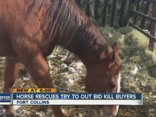 Horse Rescue groups get Christmas Miracle,...