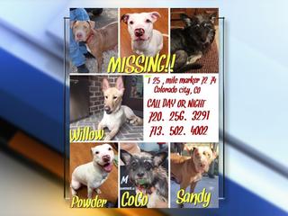3 of 4 dogs missing after fatal I-25 crash found