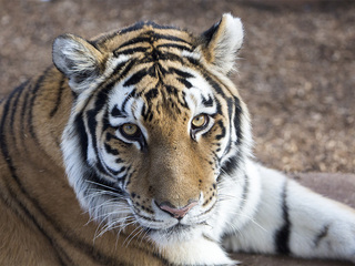 5 new animals you can visit at the Denver Zoo