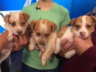 Pet of the Day for March 12 - 3 adorable puppies