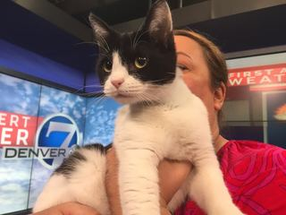 Pet of the day for March 18 - Aspen the cat