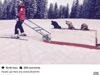 Lindsey Vonn spotted with avalanche dogs in Vail