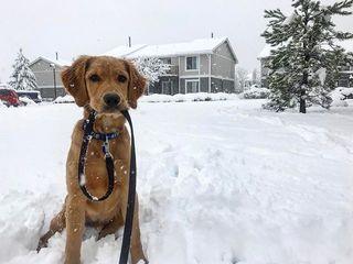Gallery: Snow again returns to Colorado