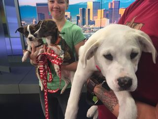 Pet of the day for April 30 - 3 adorable dogs