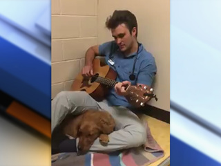 CO vet sings to anxious pup before surgery
