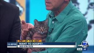 Pet of the day for May 7 - Sage the kitten