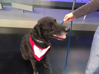 Pet of the day for May 20 - Kane the elderly dog