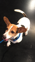Pet of the day for June 3 - Jackie the dog