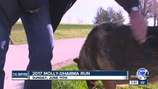 The 2017 Molly-Dharma Run for animal shelters