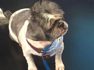 Pet of the day for June 17th