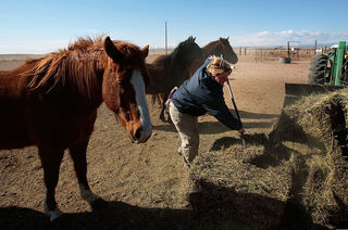 Tenn. group takes in 35 Colo. horses