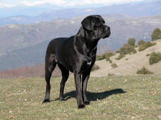 These dog breeds are illegal in parts of CO