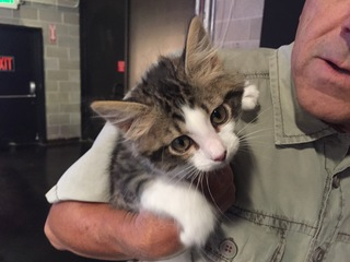 Pet of the day for July 16 - Darla the kitten