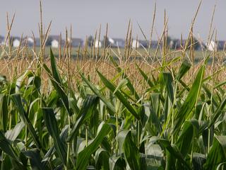 7 most popular crops grown in Colorado