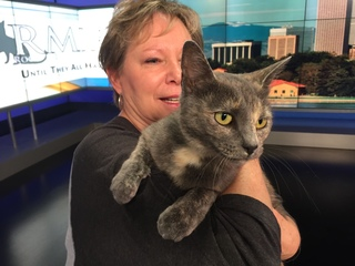 Pet of the day for July 22 - Farrah the cat