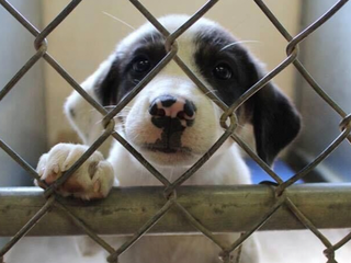 Dogs rescued from NM shelters travel to CO