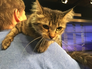 Pet of the day for August 5 - Asher the cat