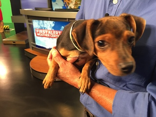 Pet of the Day for August 20 - Mack the puppy